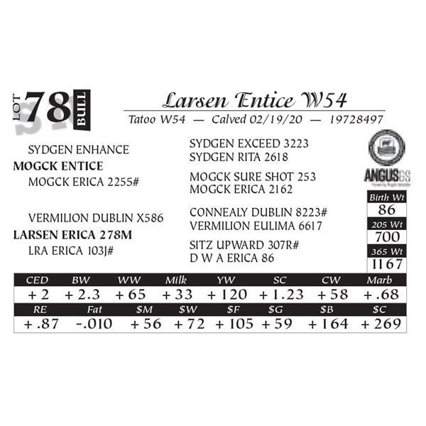 Larsen Entice W54