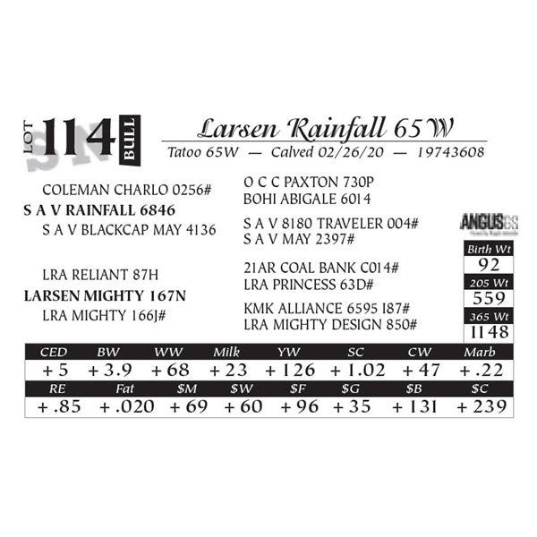 Larsen Rainfall 65W