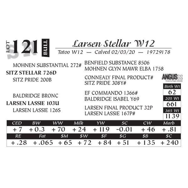 Larsen Stellar W12