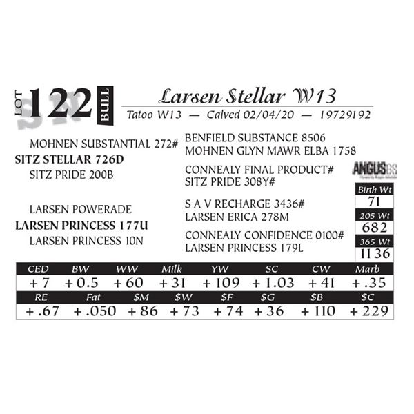 Larsen Stellar W13