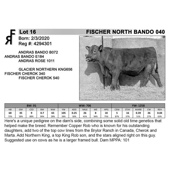 FISCHER NORTH BANDO 040