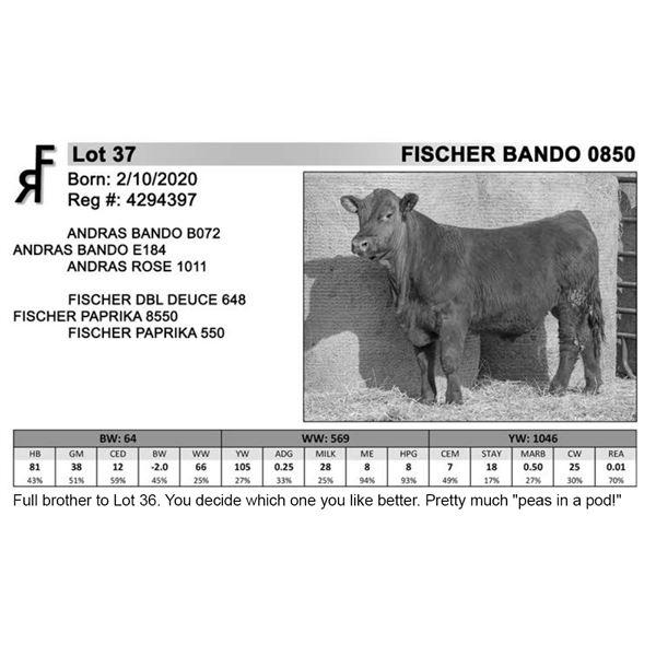 FISCHER BANDO 0850