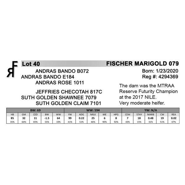 FISCHER MARIGOLD 079