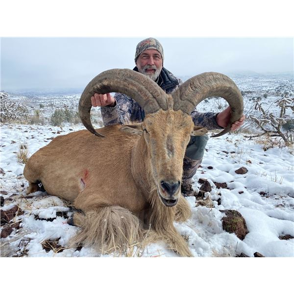 5-day Free Range West Texas Trophy Aoudad Sheep Hunt for 1 Hunter and 1 Observer