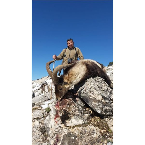 4-Day Spain Southeastern Ibex and Monteria (Driven Hunt) for One Hunter & One Observer