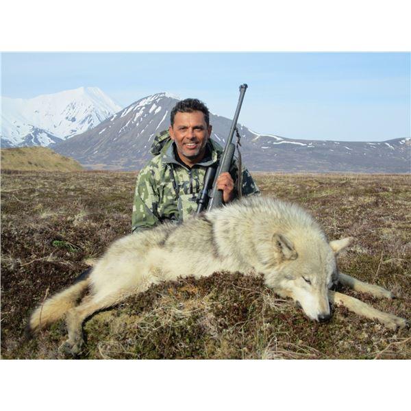 6-day Alaskan Peninsula Wolf & Wolverine Combo Hunt for 1 Hunter