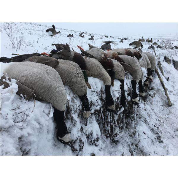 4-Day North Dakota Waterfowl Hunt for 2 Hunters