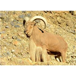New Mexico Aoudad Hunt 5-day Fully Guided