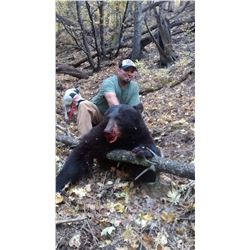 New Mexico Fall Bear hunt with hounds Fully Guided
