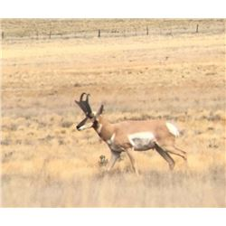 New Mexico Antelope Hunt for 2 hunters