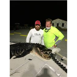 "Florida Alligator up to 11'6""""/ Hog Hunt"
