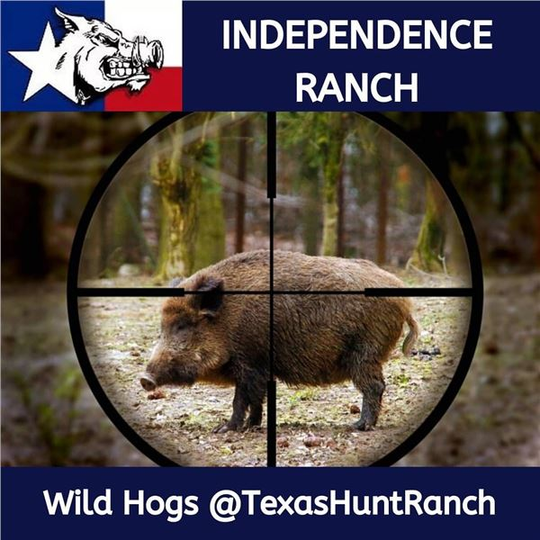 3-day Texas Hog Hunt for two with Independence Ranch