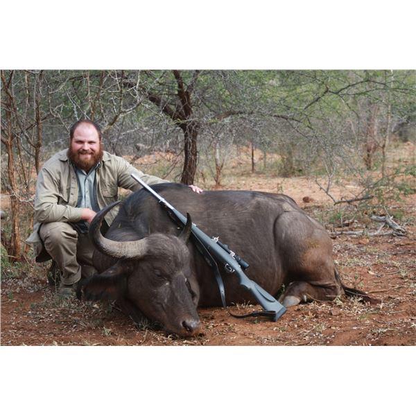 Cape Buffalo Cow & Plains Game African Safari with Trompettersfontein Safaris
