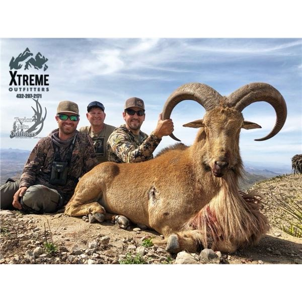 3-day Texas Aoudad Hunt with Xtreme Outfitters