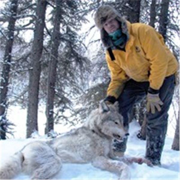 Alaska Winter Predator Hunt/Trapline Adventure with Midnight Sun Safaris