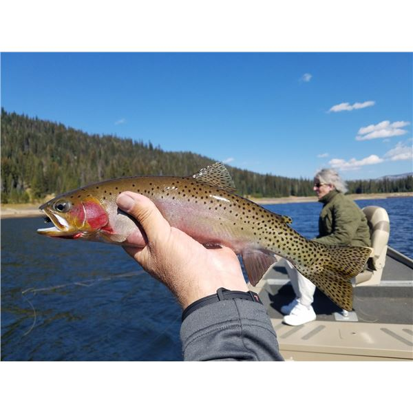 Fly Fish McCall