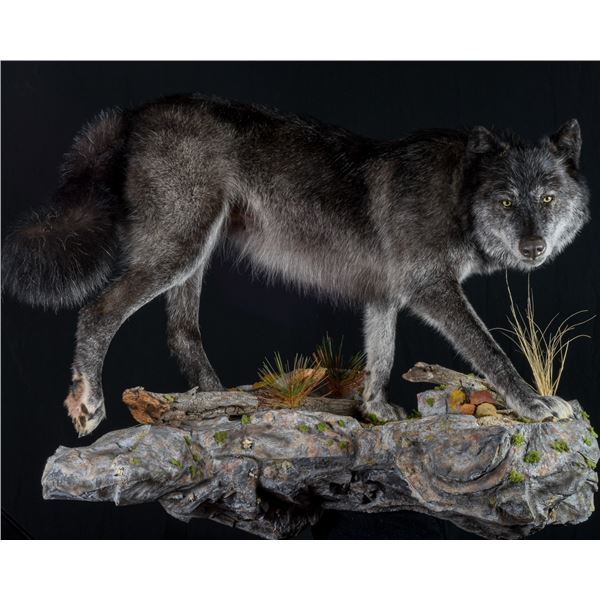 $500 certificate towards Taxidermy with Imperial Taxidermy