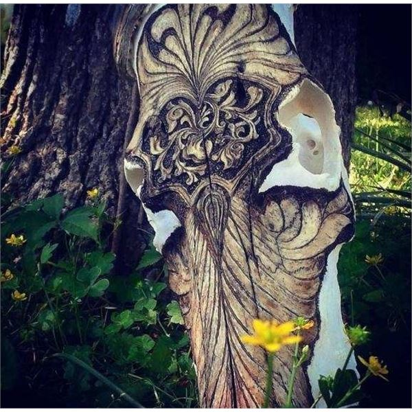 Nevada Grassie Skull Carving - NEW--  JUST ADDED.  TEXAS AOUDAD HUNT FOR WINNER OF SKULL CARVING