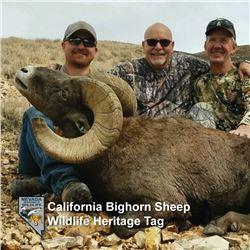 Nevada Heritage California Bighorn Sheep Tag