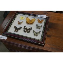 CASED BUTTEFLY DISPLAY