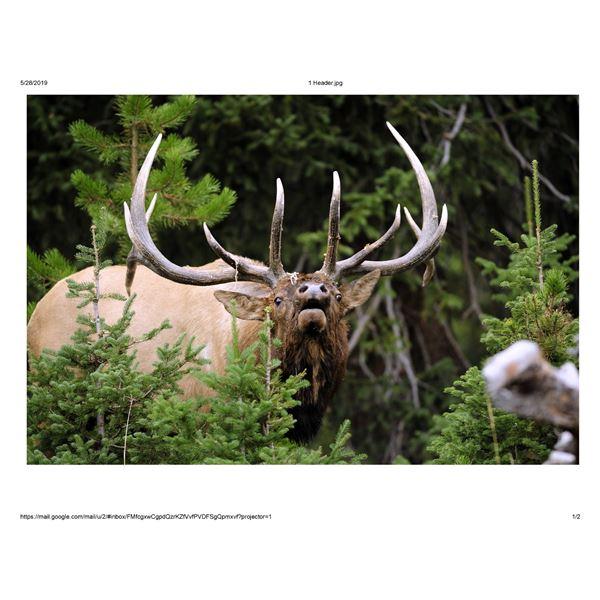 Trophy Barbary Sheep(Aoudad) Trophy Bull Elk or Trophy Mule Deer in New Mexico Winning Bidders Choic