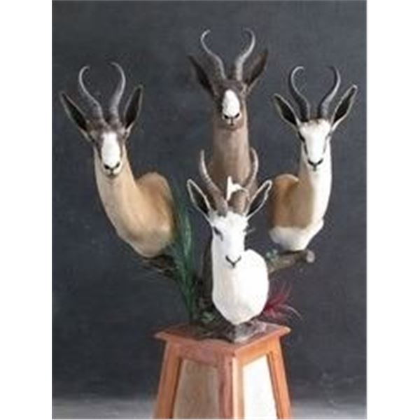 SpringBuck GrandSlam Plus a Golden Wildebeest For 2 Hunters & 2 Non-Hunter MakhuluSafaris