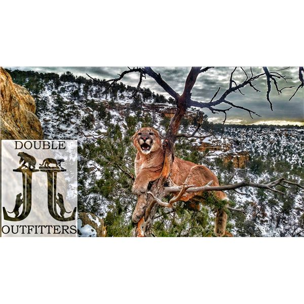 Mountain Lion Hunt In Northern New Mexico for One Hunter