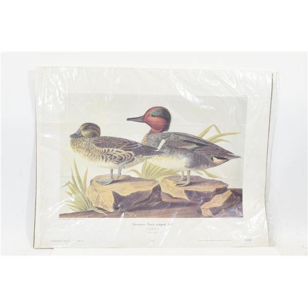 JJ Audubon Waterfowl Art Prints
