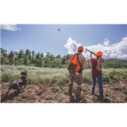 New Hampshire Upland Pheasant Hunt for 2 Hunters