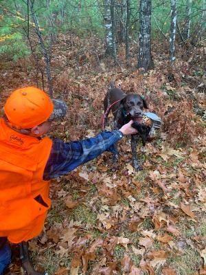 NH Guided Phesant hunt