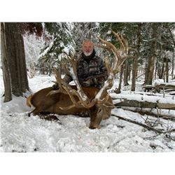 Maine Red Stag Hunt