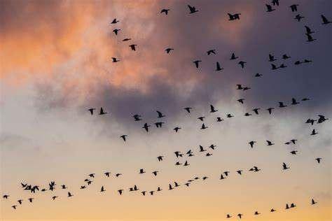 Migratory Bird Banding