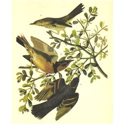 c1946 Audubon Print, #369 Thrasher and Thrush