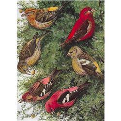 1936 Pearson Birds, Crossbill