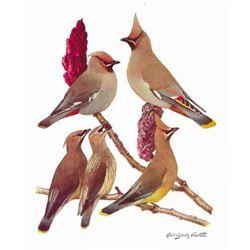 1936 Pearson Birds, #90 Waxwing (Bohemian, Cedar)