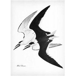 1950 Menaboni Black & White Print, Black Skimmer Bird
