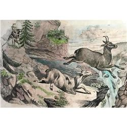 18thc Handcolored Engraving, Chamois Hunting