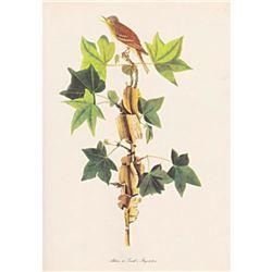 c1950 Audubon Print, Alderor Traill's, Flycatcher