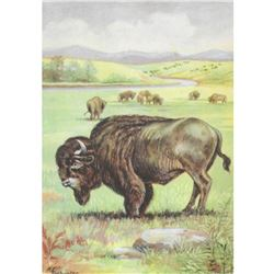 1920's Bison Color Lithograph Print