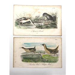 Pair of 18thc Hand-colored Engravings, Crane, Avoset, Carolina Rail, Clapper Rail