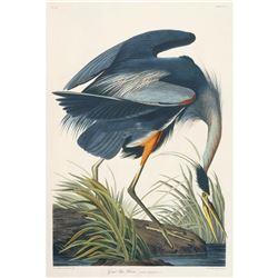 c1946 Audubon Print, #211 Great Blue Heron