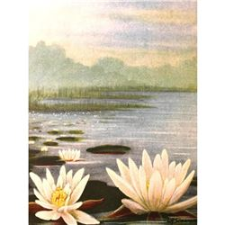 1920's Pond Lily Color Lithograph Print