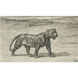 Vintage c1920's Half-tone Print, #1002 Tiger