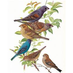 1936 Pearson Birds, Grosbeak-Indigo Bunting