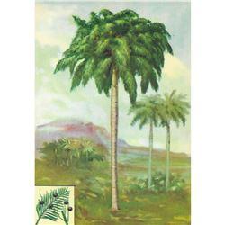 1920's Royal Palm Color Lithograph Print