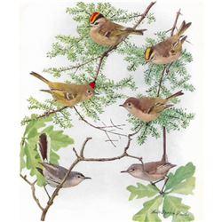 1936 Pearson Birds, Kinglets-Gnatcatcher