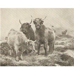 Vintage c1920's half-tone print, #547 Denizens of the Highlands
