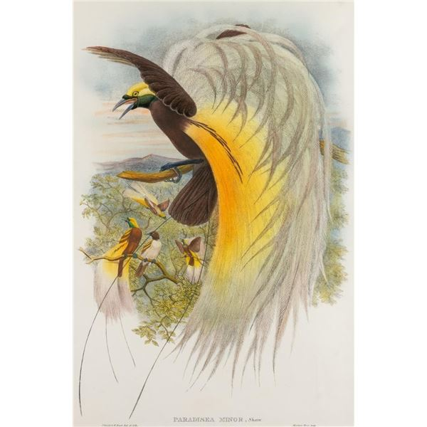 John Gould, hand-colored lithograph