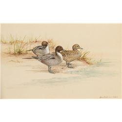 Janeen Schissler, three watercolors