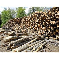Michigan - Ten Pulp Cord of Firewood